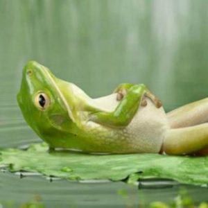 Sleep Workshop, Secrets to a Great Nights Sleep, Michelle A. Hardwick, Release...Peace, Insomnia